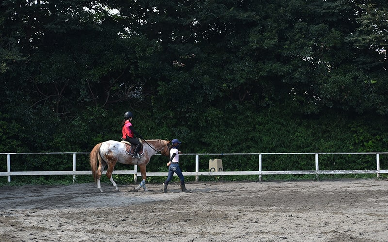 体験乗馬、乗馬教室